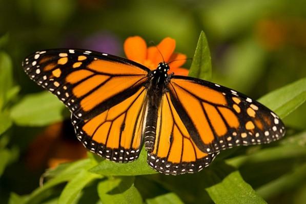 alameda butterfly-birds